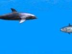 Jugar gratis a Delfín
