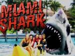 Jugar gratis a Miami Shark